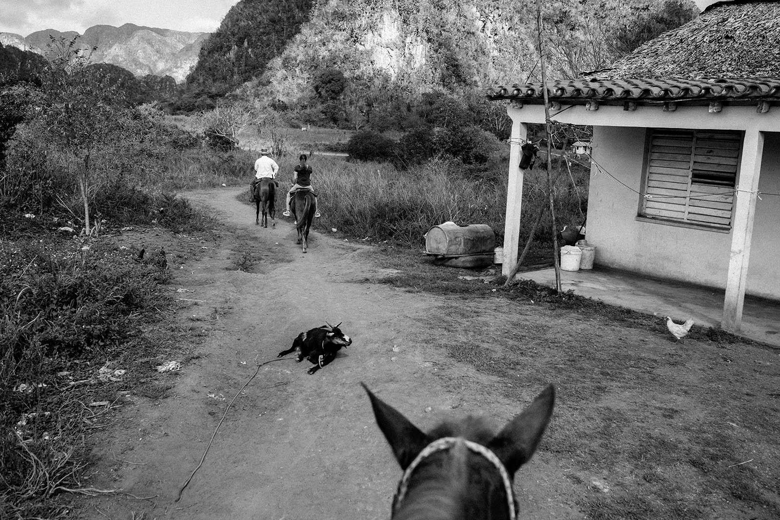 viñales cuba, photo essay, horse, cowboy